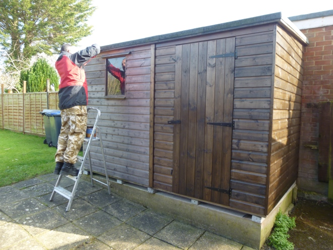 Shed Prep March 2016.JPG